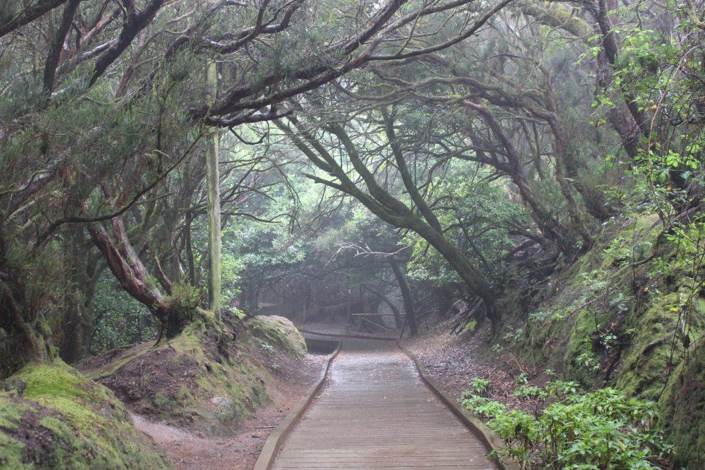 יער אנגה
